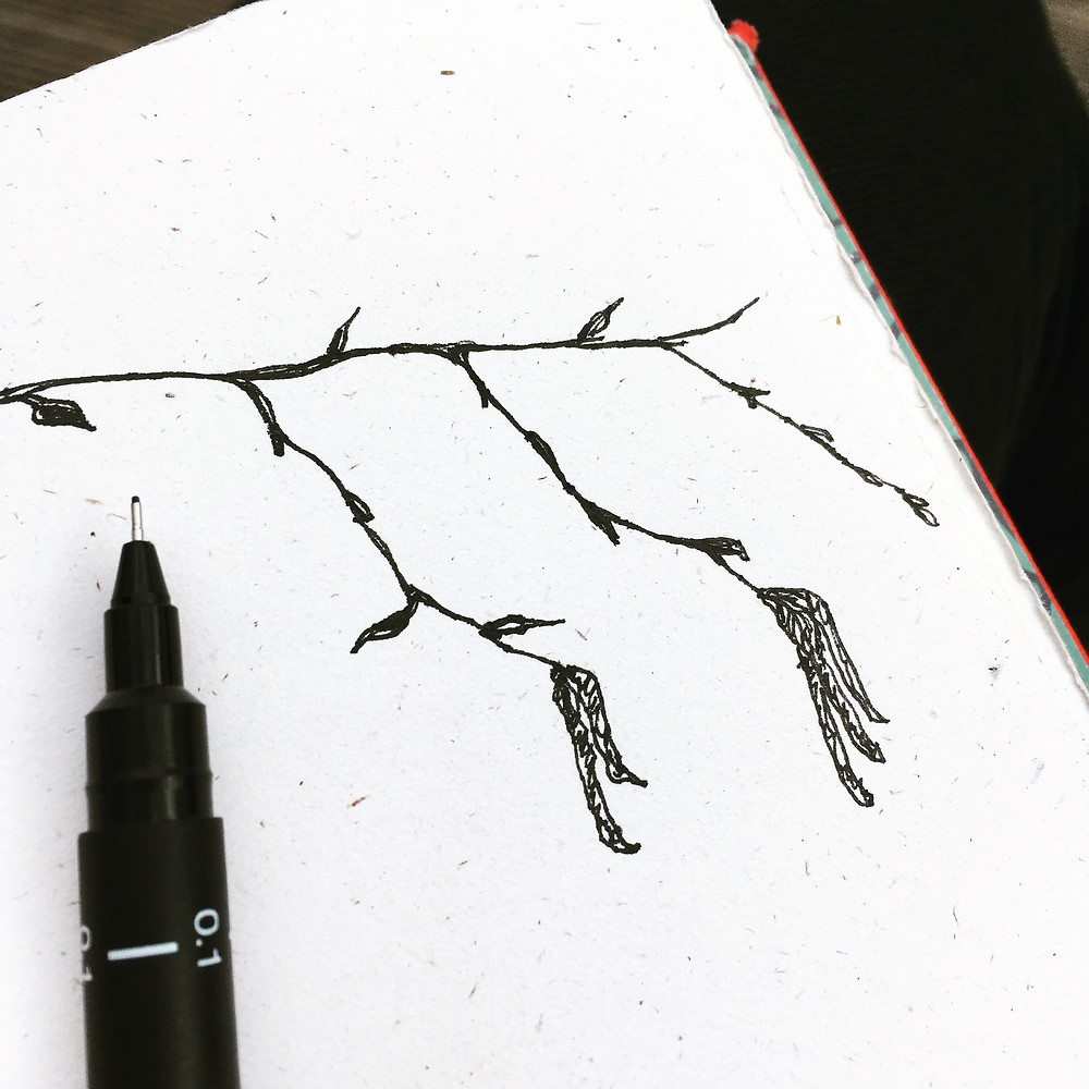 "Catkin study when I had 15 minutes to ""kill"" on a park bench recently."