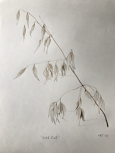 Wild Oat Ink Drawing