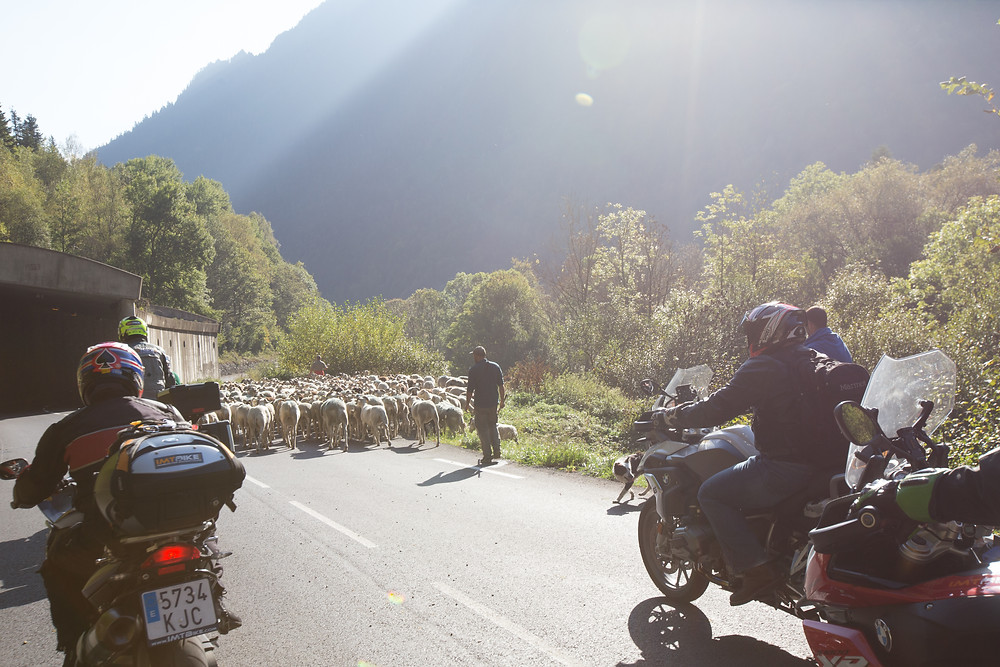 Leod Escape Riders wait for sheep in Spain. Photo: Oxymoron Photography.