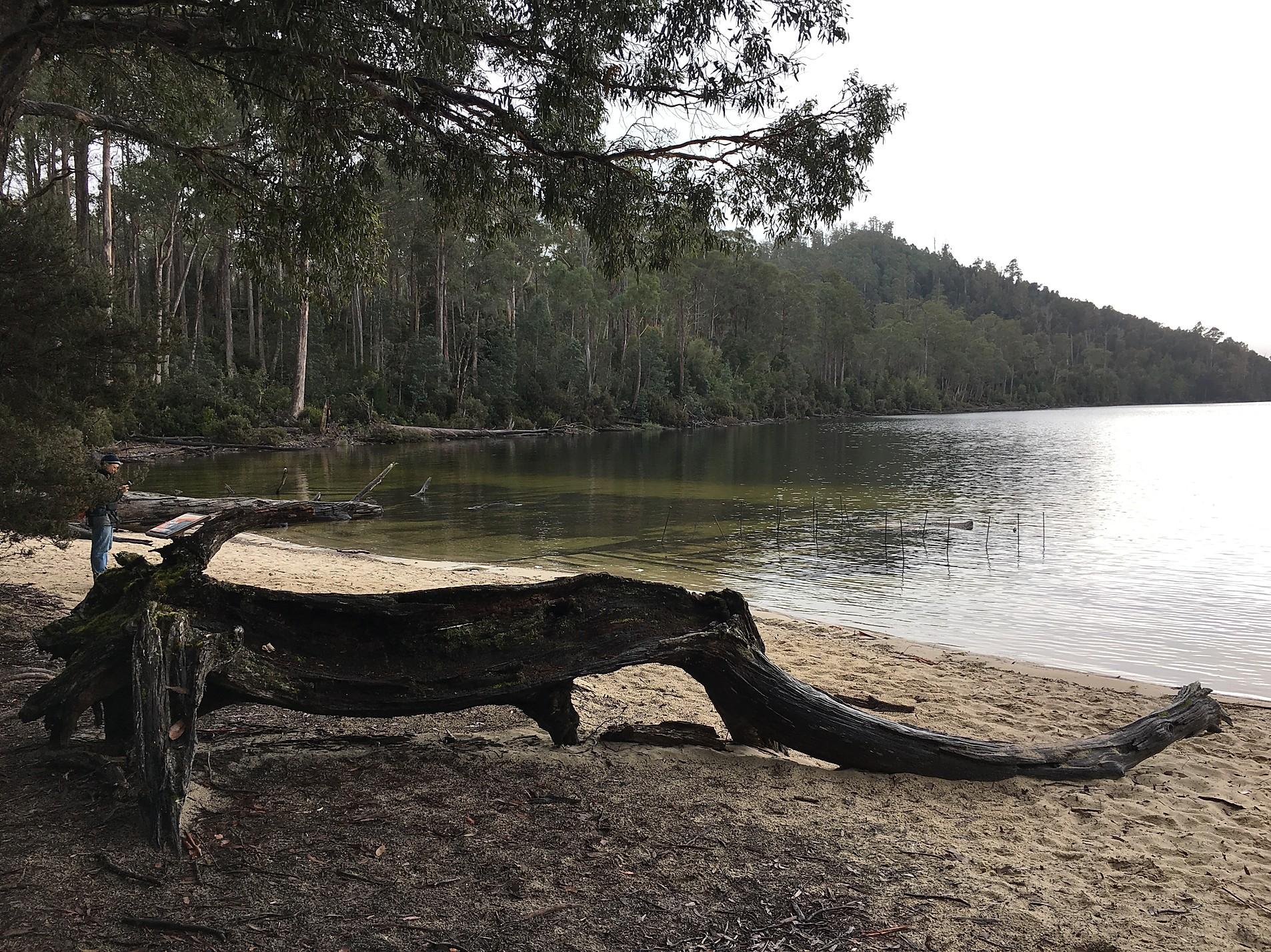 lake St Clair, озеро Сант Клэр — Тасмания 2017 — Блог о путешествиях Сергея Чеботова