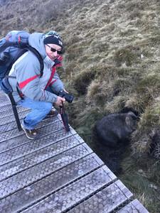 Маунтин Крейдл, вомбаты — Тасмания 2018 — Блог о путешествиях Сергея Чеботова