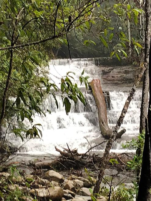 Верхний водопад Liffey Falls — Тасмания 2018 — Блог о путешествиях Сергея Чеботова
