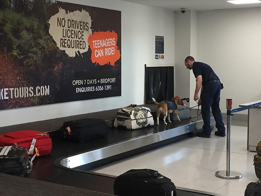 Аэропорт Лонсестона — Тасмания 2018 — Блог о путешествиях Сергея Чеботова