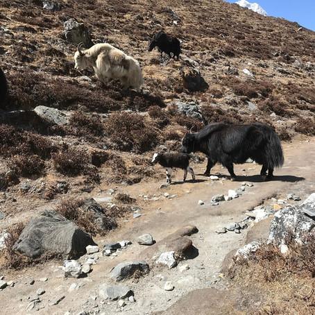 Непал 2019. Часть 2