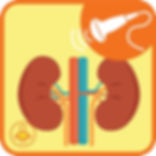 УЗИ мочевыводящих путей (почки, надпочечники и мочевой пузырь)