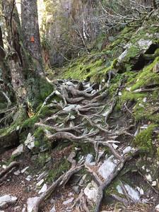 Lake Wilks track — Тасмания 2018 — Блог о путешествиях Сергея Чеботова