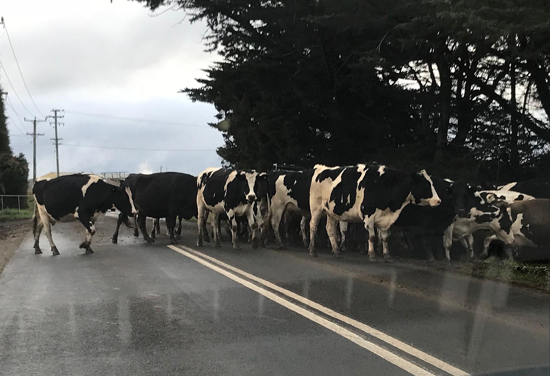 Фрески на дорогах Шеффилда — Тасмания 2018 — Блог о путешествиях Сергея Чеботова