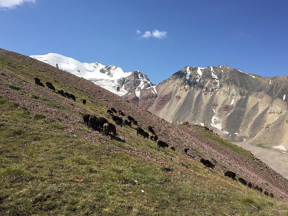 Восхождение на Пик Ленина | skitour.club | Блог Сергея Чеботова