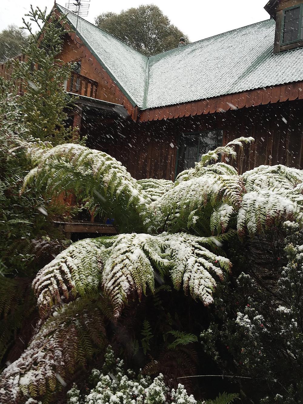 Снежное утро в Cradle Mountain — Тасмания 2017 — Блог о путешествиях Сергея Чеботова