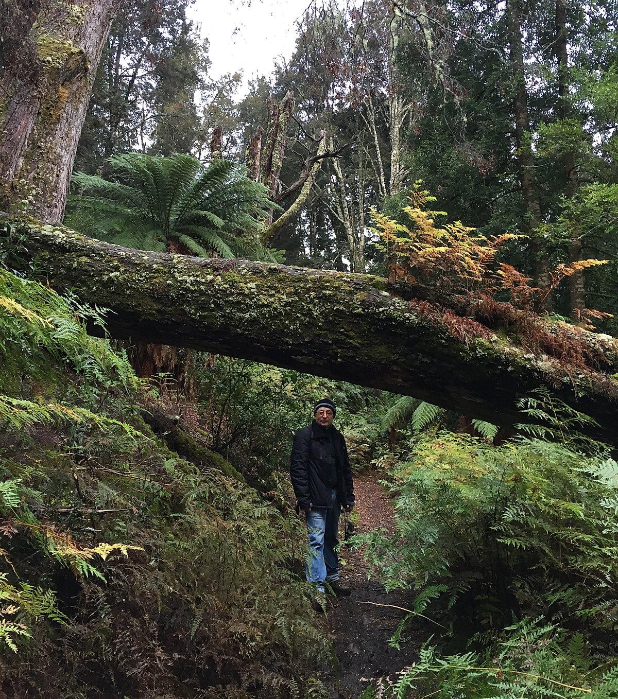 Тропа вдоль озера Сант Клэр — Тасмания 2017 — Блог о путешествиях Сергея Чеботова