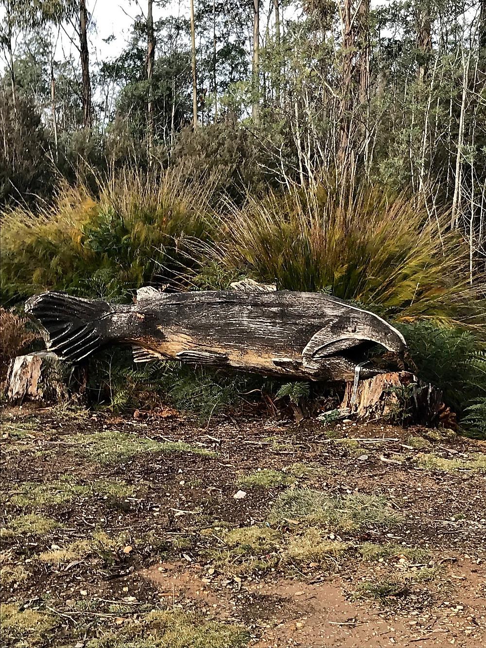 Рыборазводная ферма  41south — Тасмания 2018 — Блог о путешествиях Сергея Чеботова