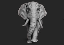Elephant (First Bank 2014)