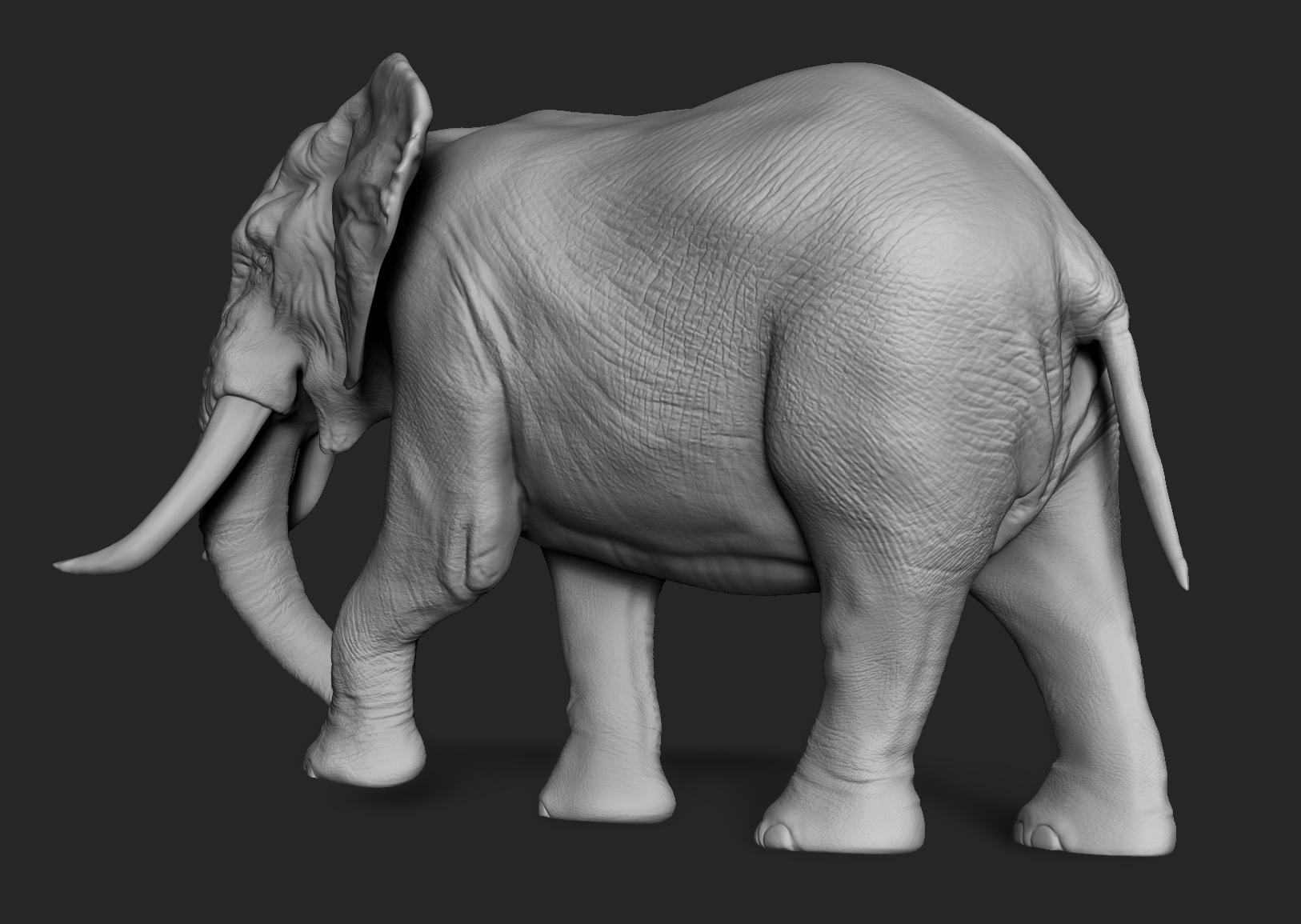 Elephant (First Bank 2014)
