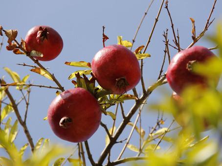 Restauração do ministério, vê fruto