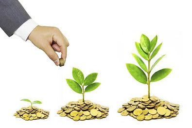 Seeds image.jpg