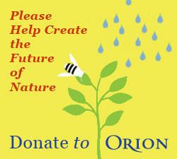 Digital advertising for Orion magazine.j