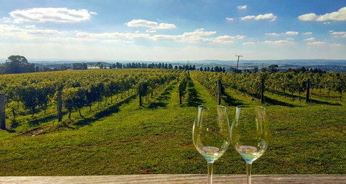 Orange NSW: Wine Tasting and Camel Racing – The Ultimate Combination