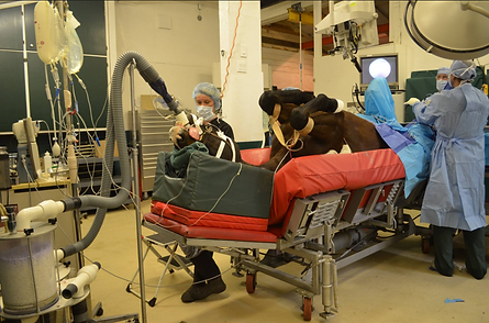 Anesthetic monitoring of horse during surgery