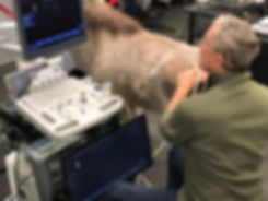 equine ultrasound