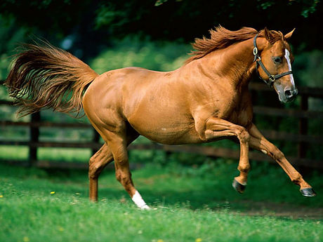 Healthy Horse on Equine Power Plus