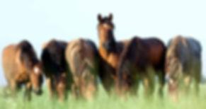 horses - equine.jpg