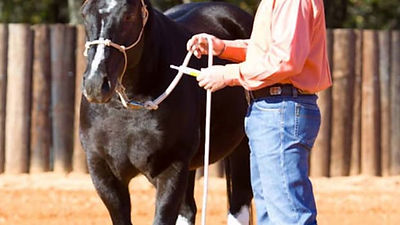 deworm-your-horse-with-clinton-anderson-