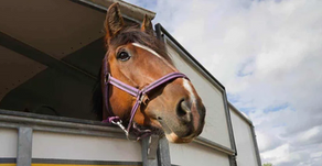 Things to Remember for Horse Travel