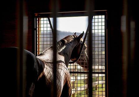 Horse experiencing stall rest