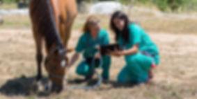 equine-veterinary-degree.jpg