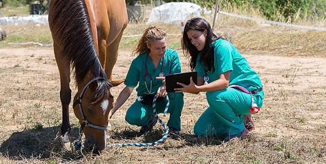 equine-veterinary-degree.jpg