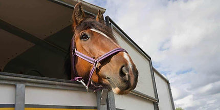 horse-looking-out-of-trailer-1280x640.jp