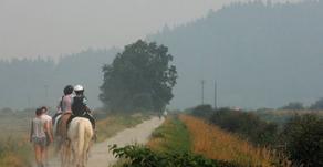 Smoke and horse health