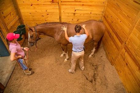 chiropractor-working-on-horse.jpg
