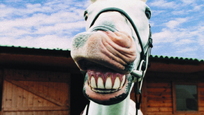 Equine Dental Care: What Every Horse Owner Should Know