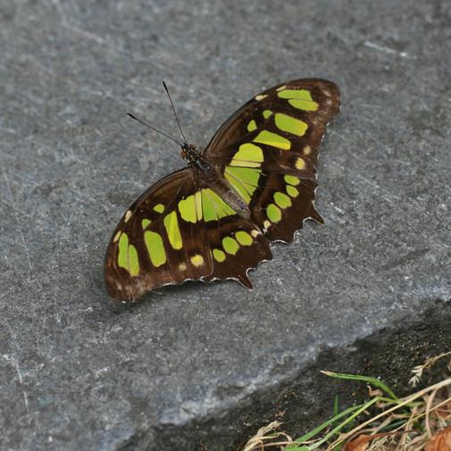 Still Butterfly - Amsterdam 2017