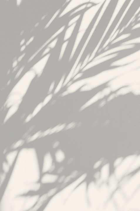 Plant%20Shadow_edited.png