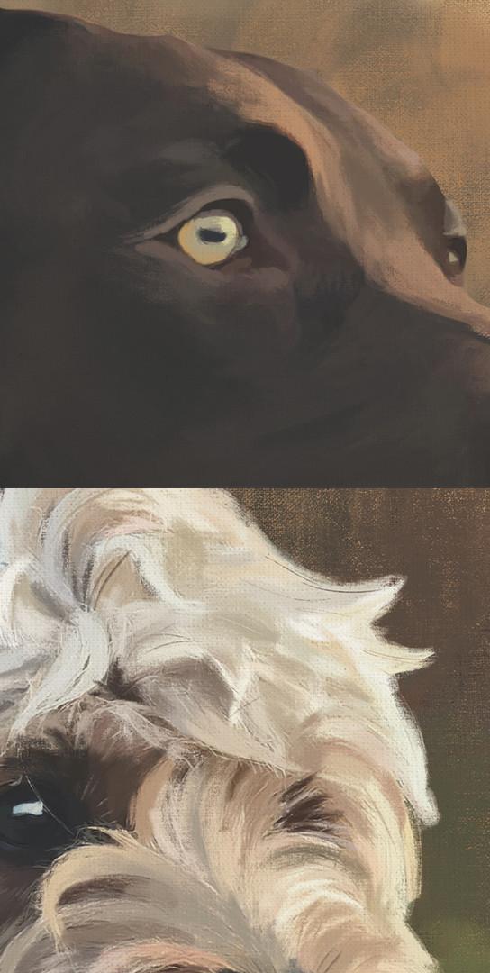 Dog Closeup.jpg