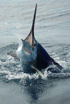 Fishing Guanacaste.jpg