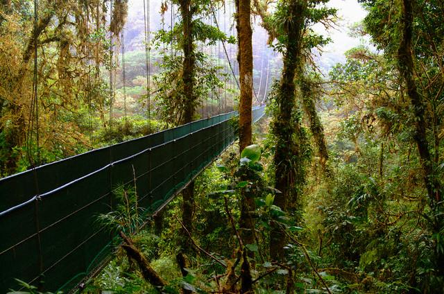 Monteverde Bridges Tour