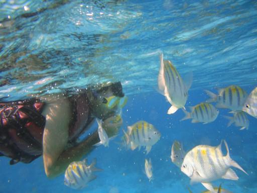 Snorkeling Guanacaste Tours