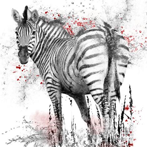Fotobewerking Zebra