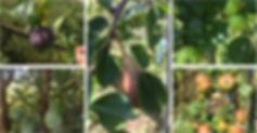 Danger fruits.jpg