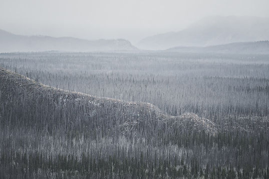 Hoar frost covers a northern forest that stretches over several mountains as far as the eye can see