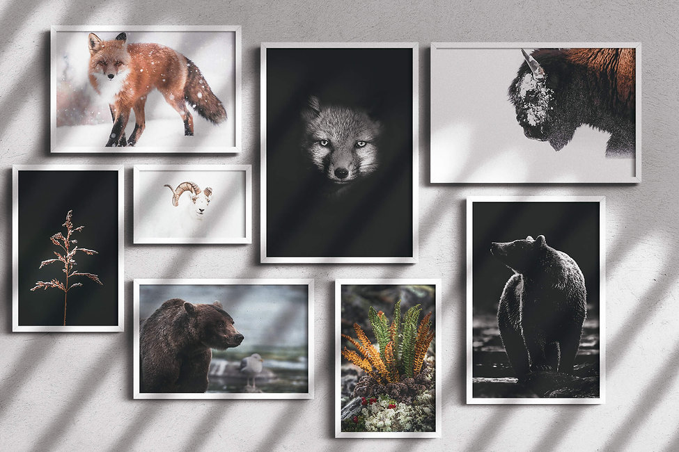 A collection of framed wildlife photos hangs is displayed on a wall
