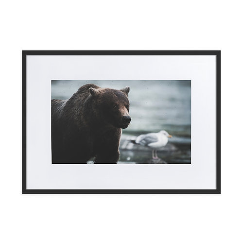 The Bear and the Gull