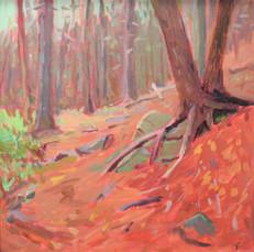 Monhegan Forest Trail