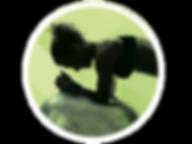 pilates rehab exercise