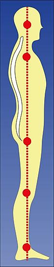 Posture Profile.jpg