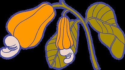 Planta de anacardo