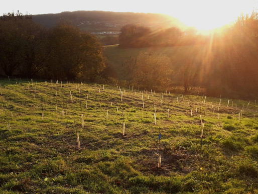 Planting Trees: Part 2